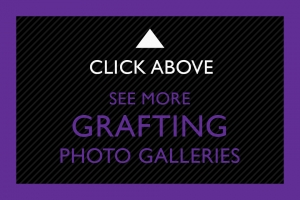 22-Click-Above-Grafting